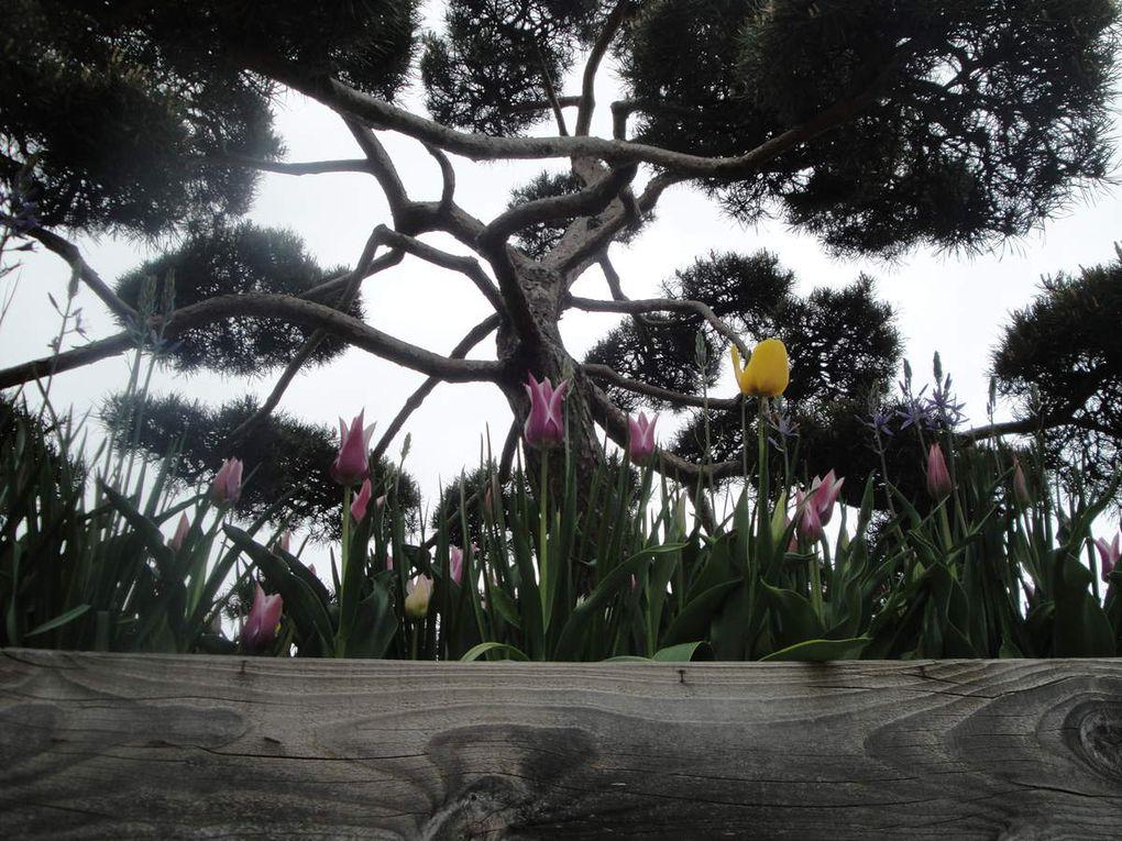En parterres en brouettes, au pied des arbres ou des ceps de vigne, en sous bois, en bordure de bassins...