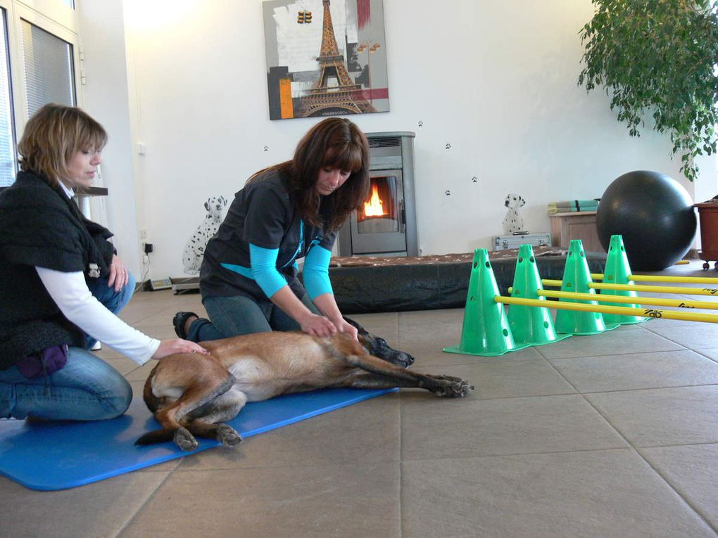 "FORMATION PHYSIOTHERAPIE VETERINAIRE ""A LA CARTE """