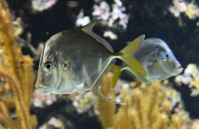 La réponse à la petite énigme d'avril 2021 - Les poissons...