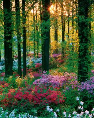 Der Blumenwald