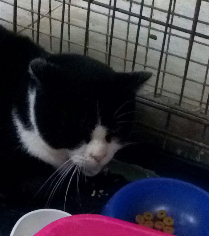 A parrainer, en socialisation : MARIONNETTE, petite chatte d'environ 1 an