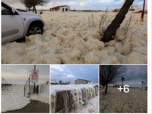 Tarnos, comme d'autres villes de la côte, a été submergée par la mousse ou écume de mer de manière assez importante.