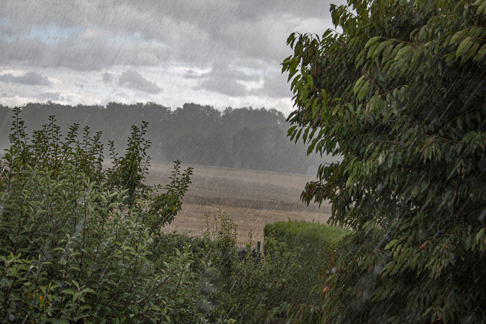 Une météo d'automne, propice au rouissage du lin...