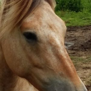 chevaux-aux-pres.com