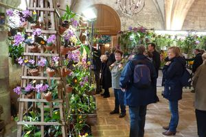 Randonnée près de l'Abbaye de Vaucelles et visite de l'exposition internationale d'orchidées (Mars 2013)