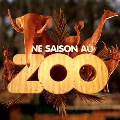 Une saison au zoo: une autre façon de voir le monde animal