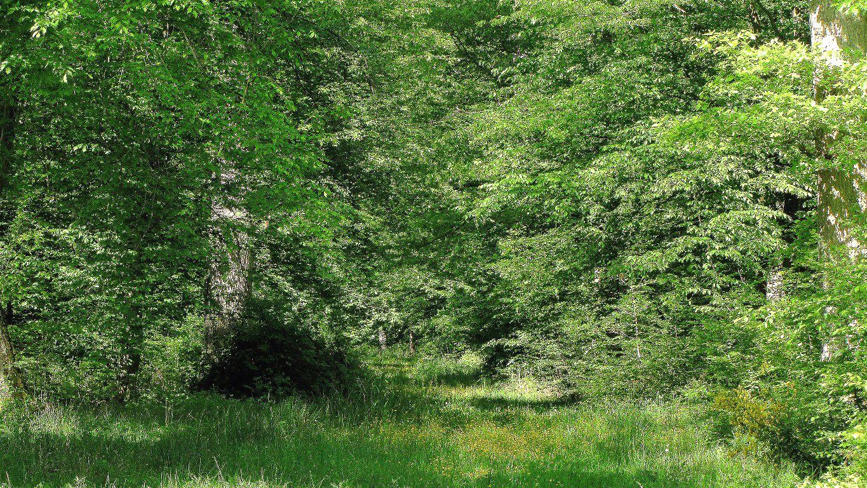 le carrefour Pannelier