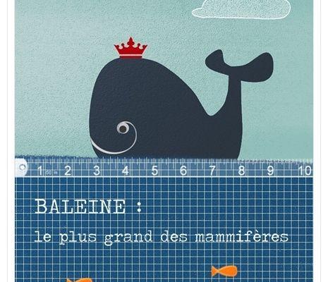 illustration baleine