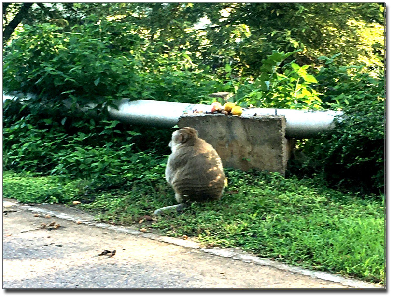 Retrouvailles avec notre fidèle Tarzan (Thaïlande)