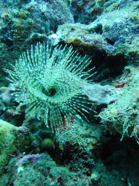 Au fil des plongées de cette année 2010... Photos-plaisir depuis différents sites de Guadeloupe.