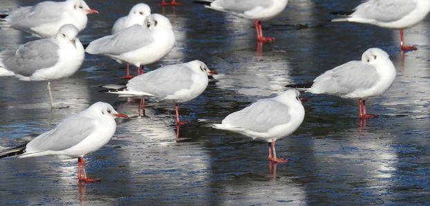 Sur l'étang gelé - poème de Livia...