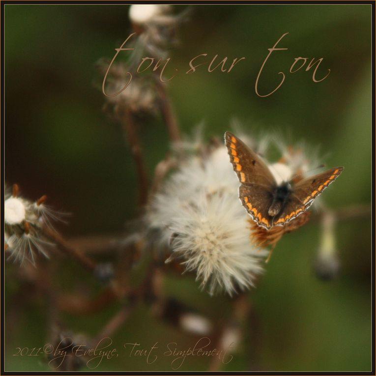 Comme l'indique le nom de l'album : photos de fleurs,insectes, gouttes d'eau ou autres en macro ou proxi..