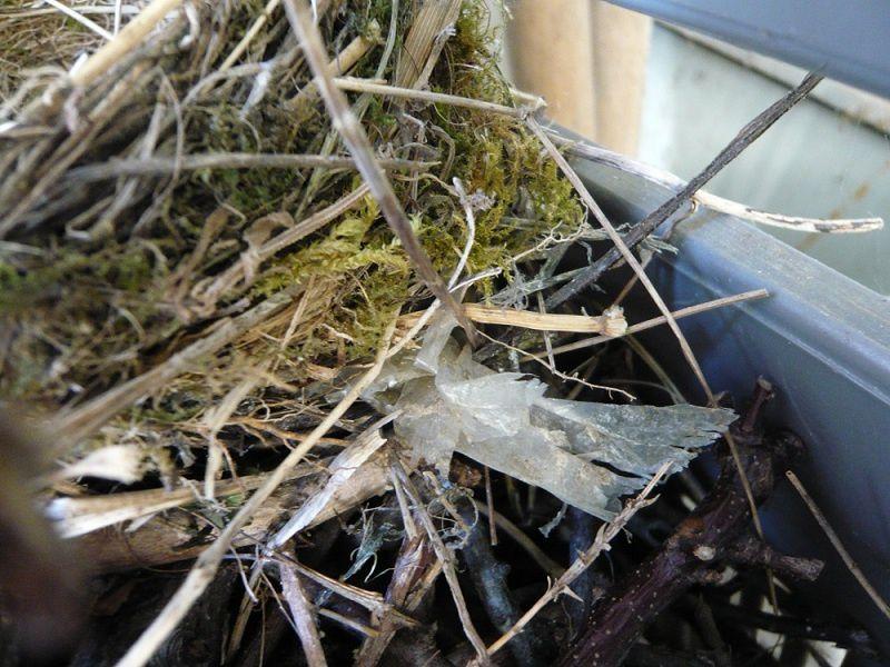 presque au jour le jour, depuis la découverte du nid et l'éclosion, jusqu'à l'épilogue