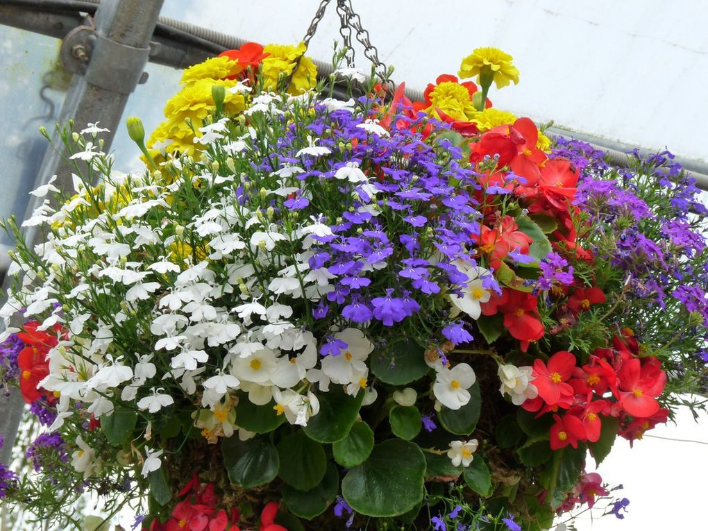 Fleurs 41