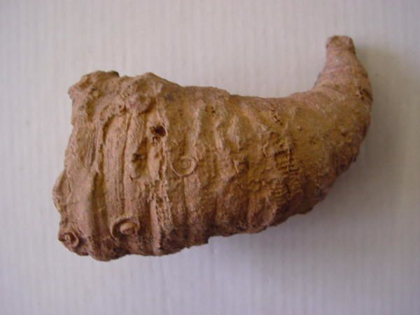 <p> L'Album de la faune paléozoïque marocaine vous permet la détermination des spécimens découverts ou acquis en bourse. </p> <p> Les spécimens appartiennent à notre collection. </p> <p> Phil « Fossil » </p>