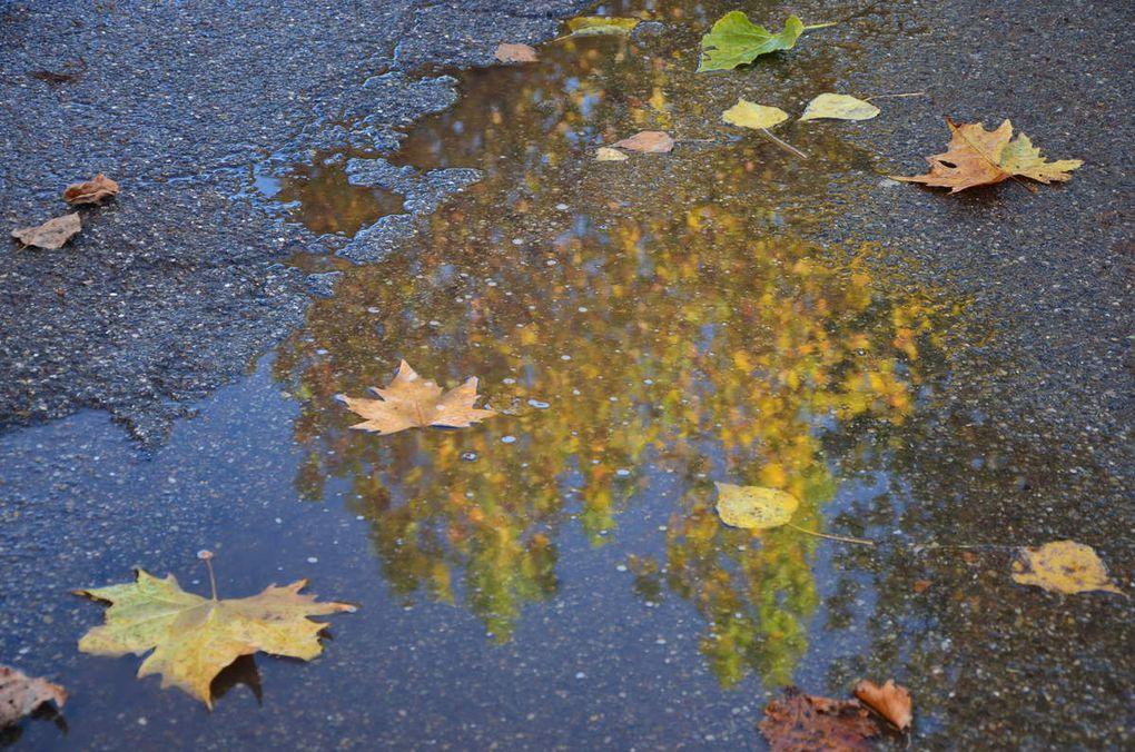 Images réalisées en automne