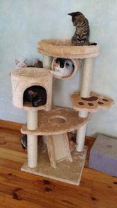 Les chatons se régalent !