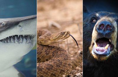 Un américain se fait attaquer par un requin, un ours et un serpent en quelques années