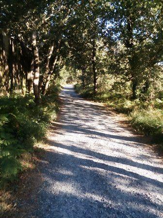 Sur le chemin, en direction de Ponte Ulla.