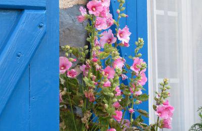 Quelques fleurs d'été de mon jardin de Haute-Loire