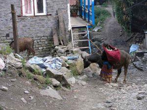 TREK ANNAPURNAS NEPAL - 3ème Etape.