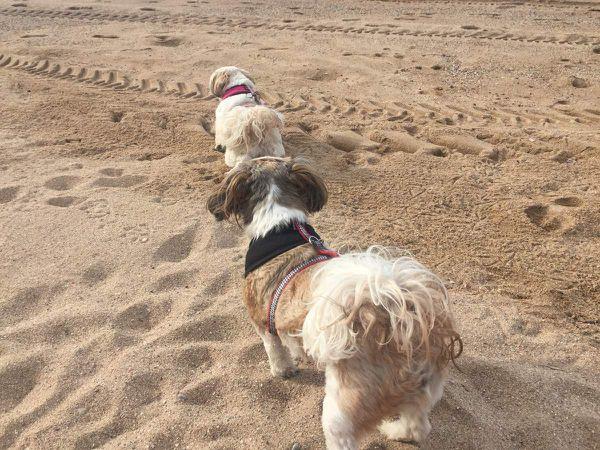 Petite infraction... les filles à la plage !
