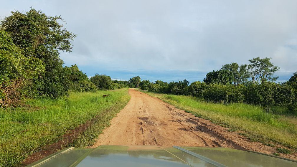 Un safari pour le moins… inoubliable !
