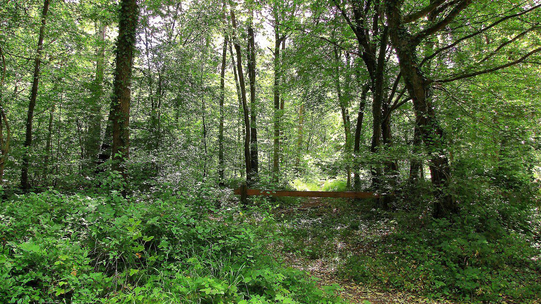 carrefour_Route du Rond Buisson_Chemin de la Fontaine à Loups
