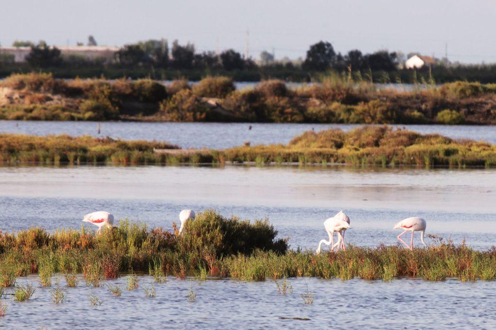 Photos prises dans le parc naturel du Delta de l'Ebre en Espagne