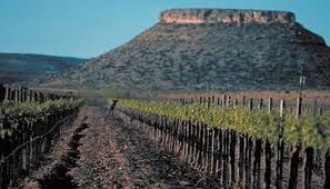 The Texas Vineyard