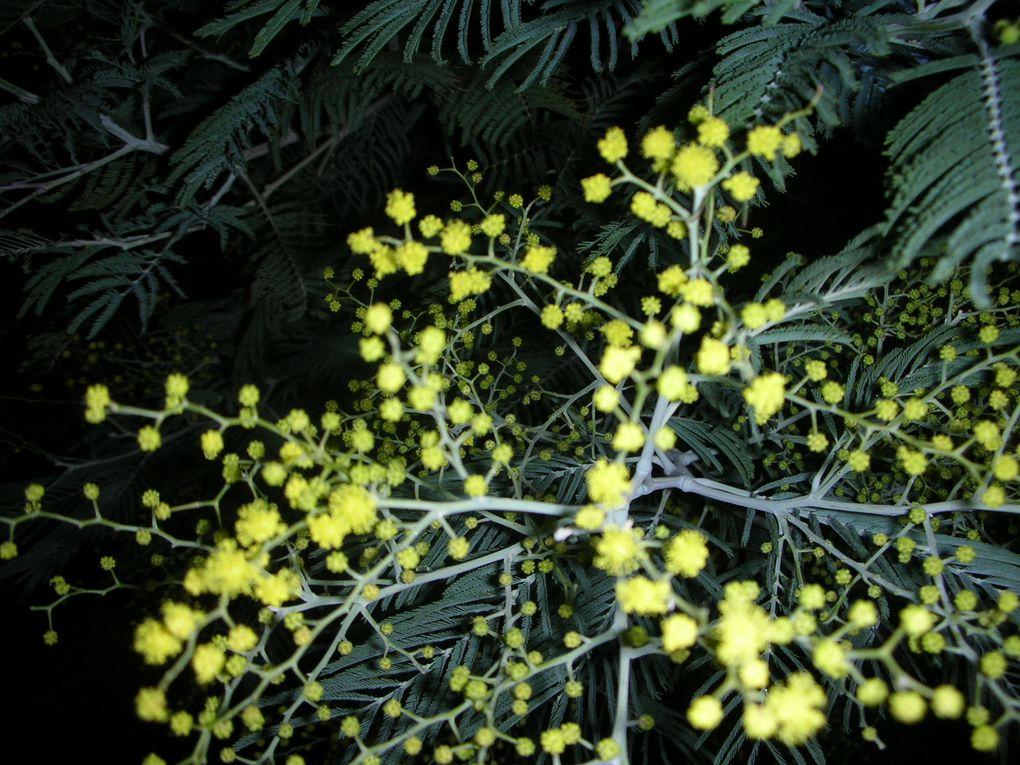 Album - La flore des îles