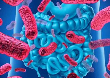 Comment votre santé intestinale influe sur votre risque de maladie Les chercheurs de Harvard