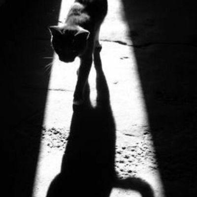 Toi toi mon chat, toi toi mon tout mon roi