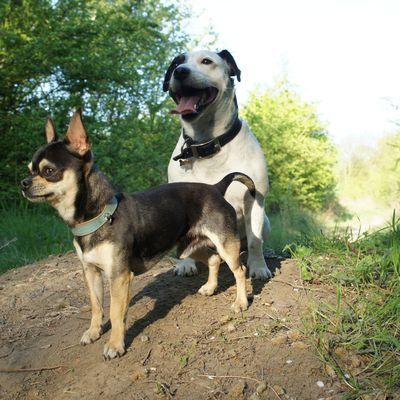 Rocco & Diego