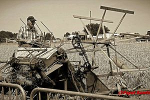 NOTRE BON VIEUX TEMPS A LA CAMPAGNE  : LA MOISSON