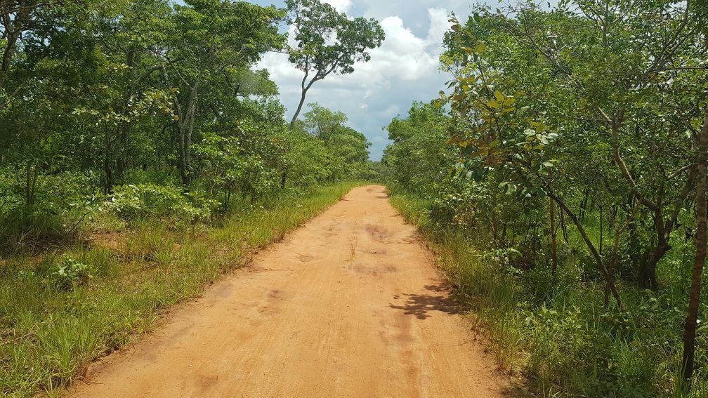 Sur les traces des Bushmen