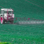 Mexico Bans Genetically Modified (GM) Corn and Glyphosate Pesticide Despite Intense Pressure