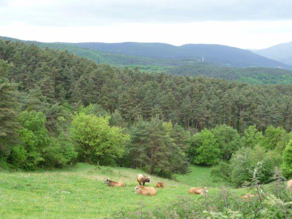 St-Jacques 2009-1.