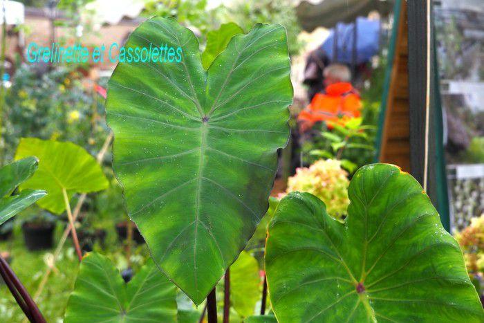 Plantes Plaisirs Passions, Fête des Plantes les 2 et 3 octobre au Château de La Roche Guyon