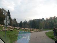 Sur les pas de Karlfried Graf Dürckheim