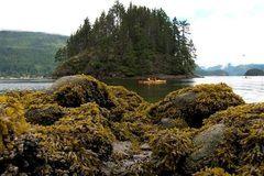 ''Super Seaweed''