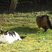 Mes chats, Défi 295 chez Evy - BEJAR PASSION
