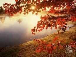 Une feuille d'automne sonne