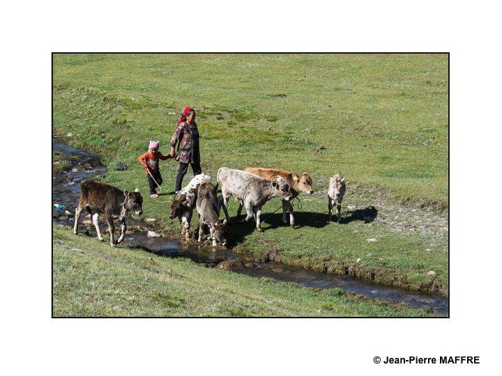 Dans ces vastes étendues de plaines et de montagnes, les animaux évoluent paisiblement.