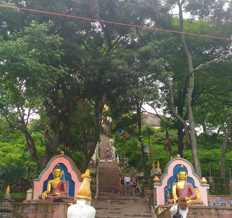 Swayambunath : temple des singes