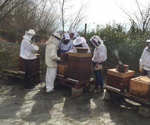 6 Avril à 14h : Visite de printemps au rucher école du SAF à Haverskerque