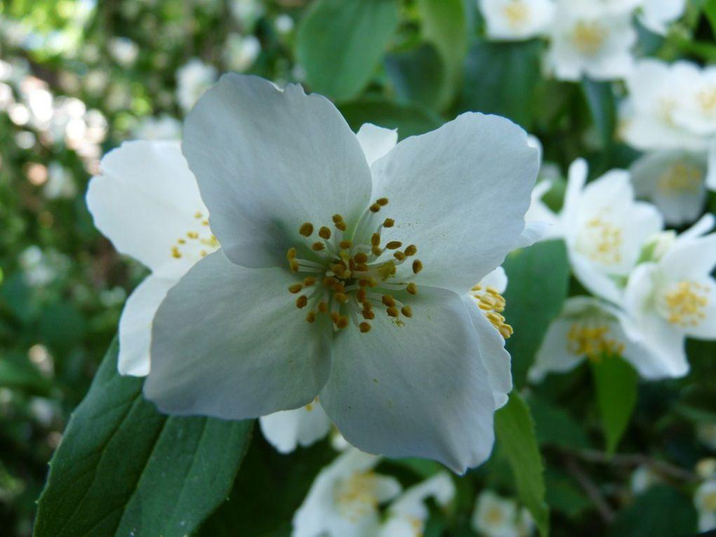 Fleurs 33