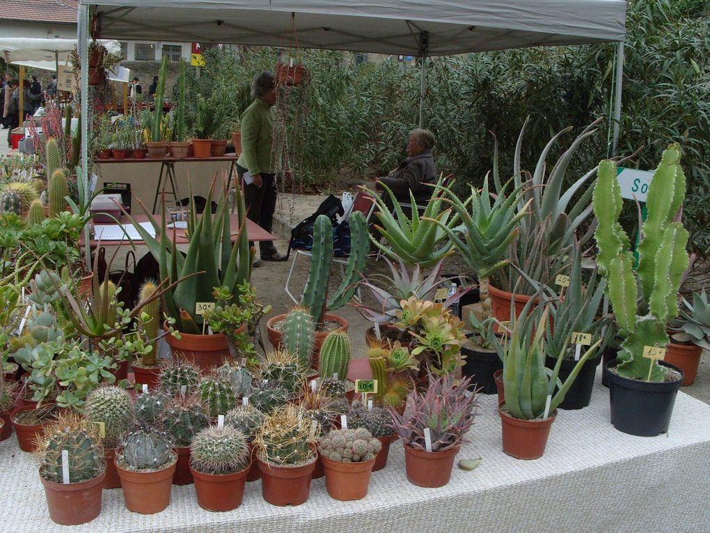 Rencontres Primavéra - Mars 2012 - Jardin des Plantes de la ville de Montpellier