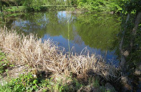l'étang d'avril