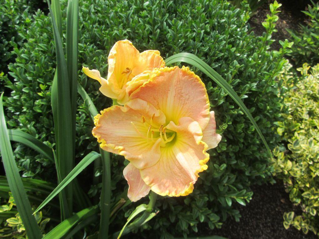 Bien sûr, lorsque l'on visite un jardin, on s'attend à voir des fleurs. Si elles sont bien présentes, je dirai que ce n'est pas pour elles seulement que ce jardin mérite une visite.